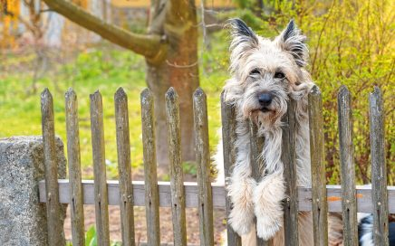 Jugendherberge Neu Nagelberg Nachbarhund- © Christoph Sammer