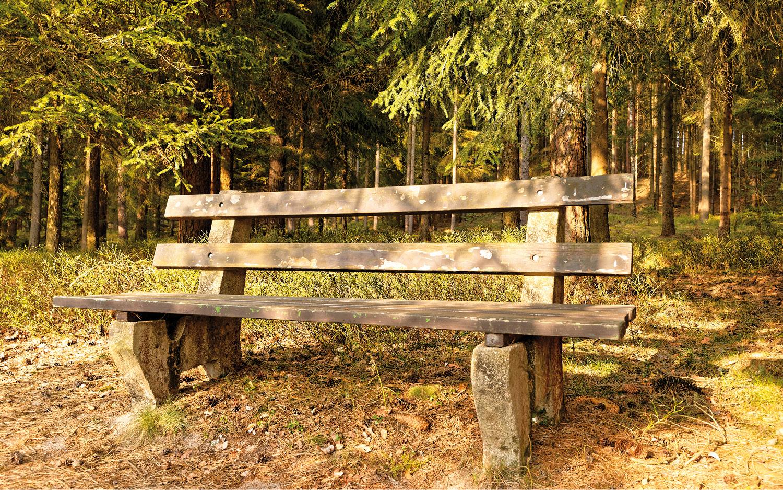 Jugendherberge Neu Nagelberg Wald Sitzbank - © Christoph Sammer