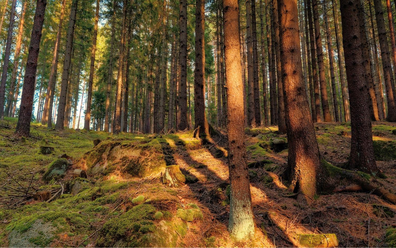 Jugendherberge Neu Nagelberg Waldstück vor der Tür - © Christoph Sammer